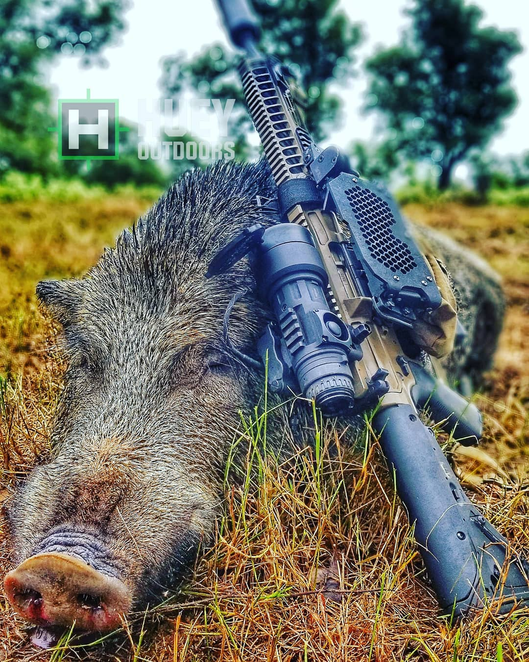 Hog Hunting – The Best AR Calibers - AR Build Junkie